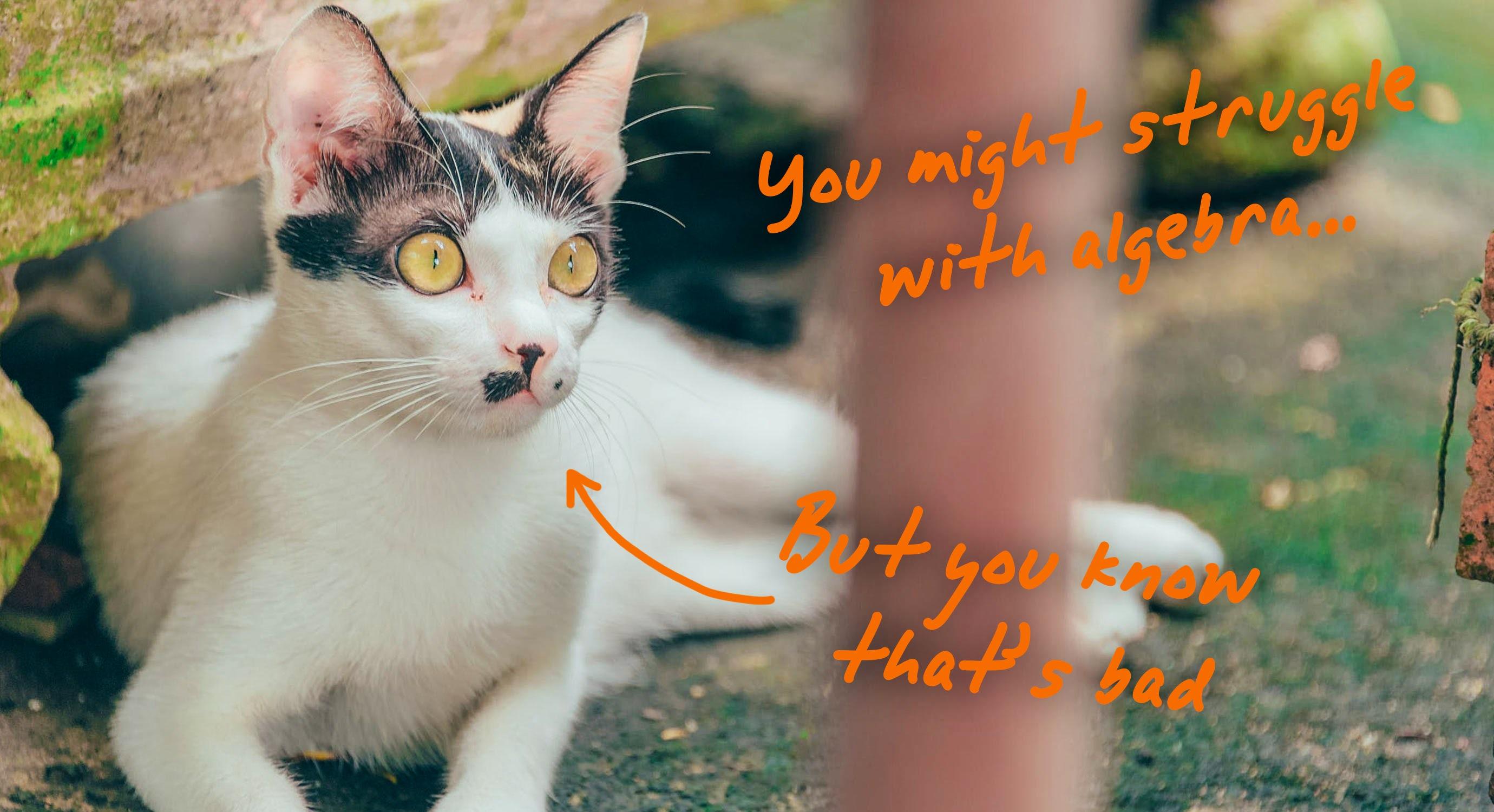 shocked cat